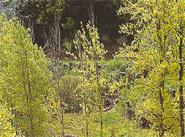 Más visitantes en 2003 para la Sierra de Espadán