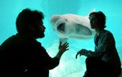 Nuevos animales para el aniversario de L'Oceanogràfic