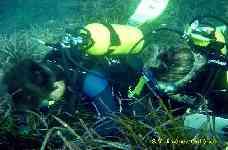 Buceadores voluntarios colaboran en el control de los fondos marinos