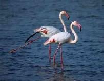 La Albufera presenta unas condiciones óptimas para las aves acuáticas