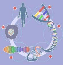 ¿El genoma mínimo?