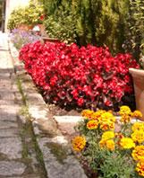 Primavera formativa: cursos del Jardín Botánico