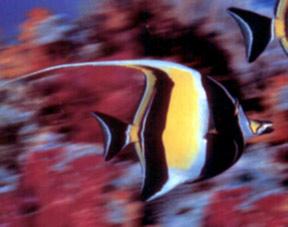 La Sociedad Cousteau muestra los resultados de su última expedición